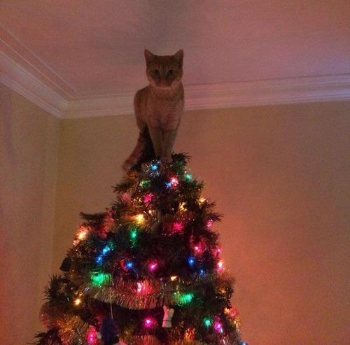 カオスなクリスマスツリーの上の飾りの画像(15枚目)