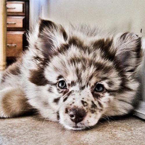 可愛い?可愛くない?ちょっと特徴的な雑種の犬の画像の数々!!の画像(37枚目)