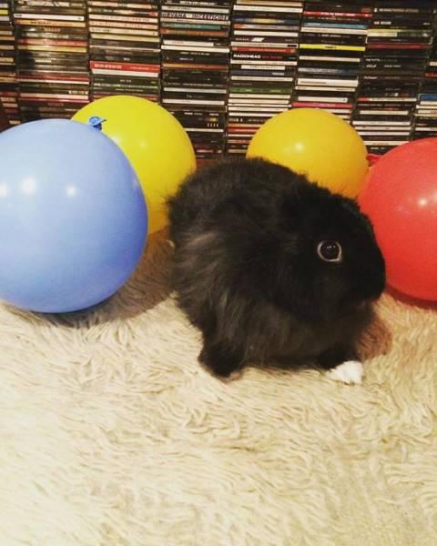 動物達の誕生日の写真の数々!!の画像(10枚目)