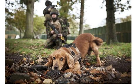 辛くても癒される!軍用犬でほのぼのしている写真の数々!!の画像(8枚目)