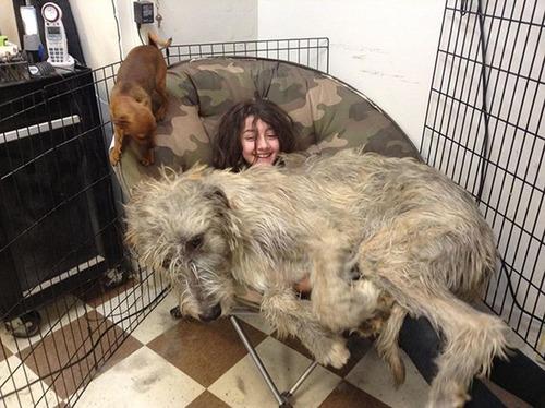 犬は可愛いけど、かなりジャマな感じの犬の画像の数々!!の画像(29枚目)