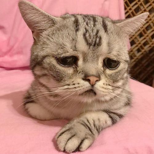 悲しくなってしまう猫の画像(1枚目)