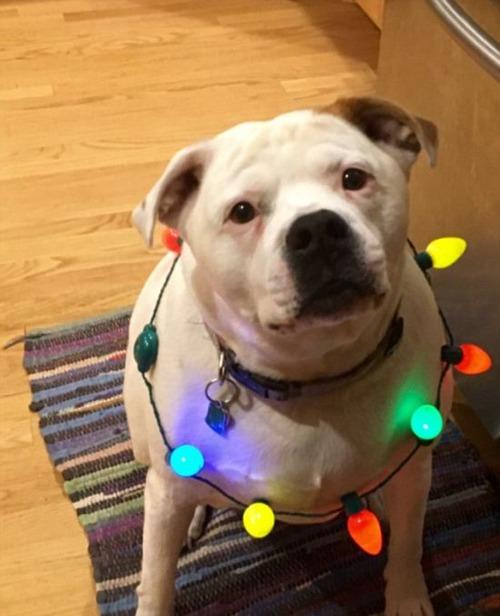 犬とクリスマスの画像(5枚目)