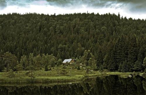 森の中の隠れ家の画像(39枚目)
