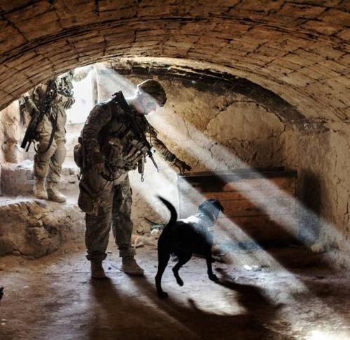 戦地での軍用犬の日常がわかるちょっと癒される画像の数々!!の画像(30枚目)