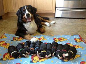 かわい過ぎる子犬の画像の数々!の画像(99枚目)