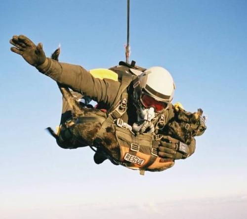 戦地での軍用犬の日常がわかるちょっと癒される画像の数々!!の画像(62枚目)