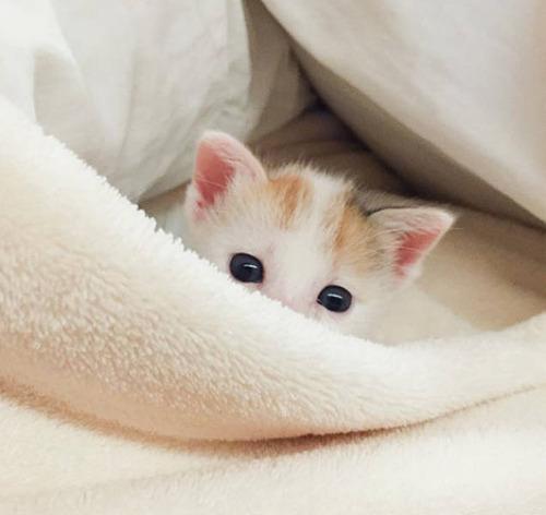 kittens_15