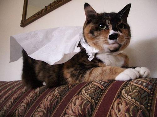 猫ちゃんのかわいいコスプレの画像(15枚目)