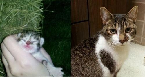 犬や猫の最初に撮った写真と最後に撮った写真の数々の画像(9枚目)