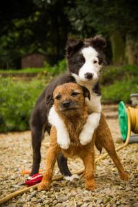 ずっと友達!仲がいい犬たちの画像が癒される!!の画像(30枚目)