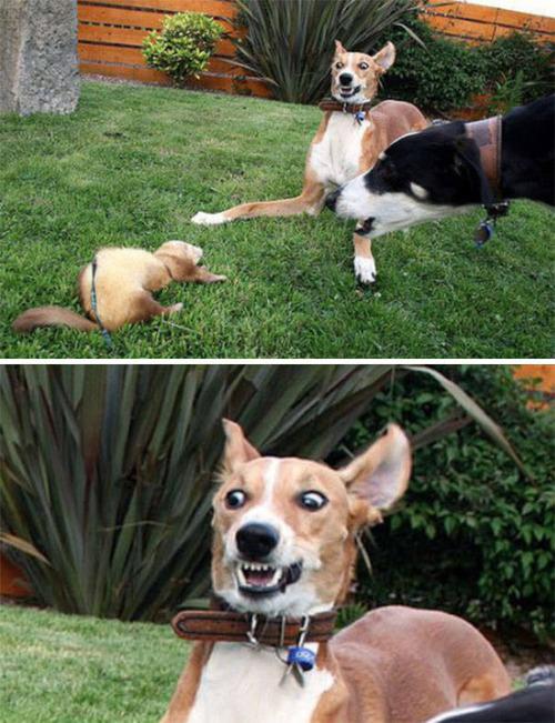 怯えてる犬の画像(36枚目)