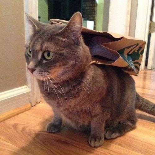 猫ちゃんのかわいいコスプレの画像(14枚目)