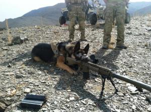 辛くても癒される!軍用犬でほのぼのしている写真の数々!!の画像(11枚目)