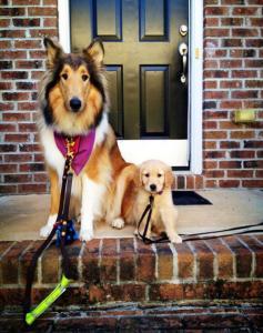 ずっと友達!仲がいい犬たちの画像が癒される!!の画像(23枚目)