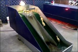 子供のアヒル用の滑り台の画像_000004321