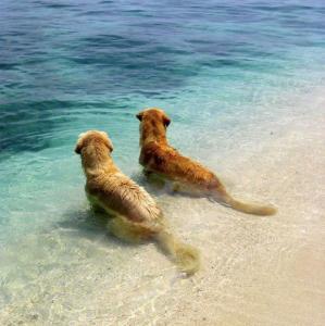 ずっと友達!仲がいい犬たちの画像が癒される!!の画像(4枚目)