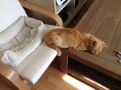 にゃんとも言えない、ちょっと困った猫の画像の数々!!の画像(34枚目)