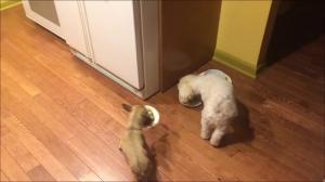 相棒の近くに器を移動して食べる犬6