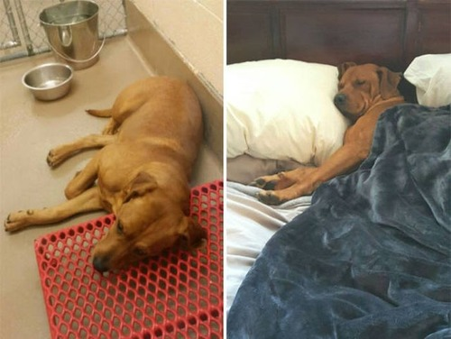 捨て犬が保護された前後の画像(8枚目)