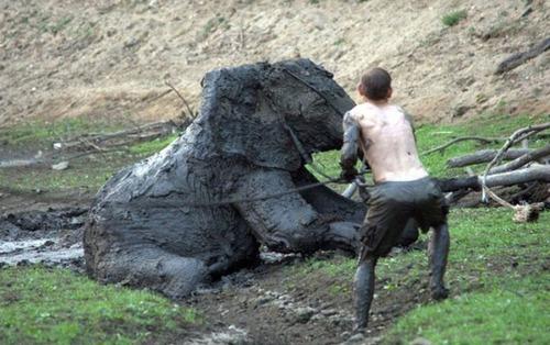 【画像】底なし沼に入った像の救出風景が感動的!!の画像(15枚目)