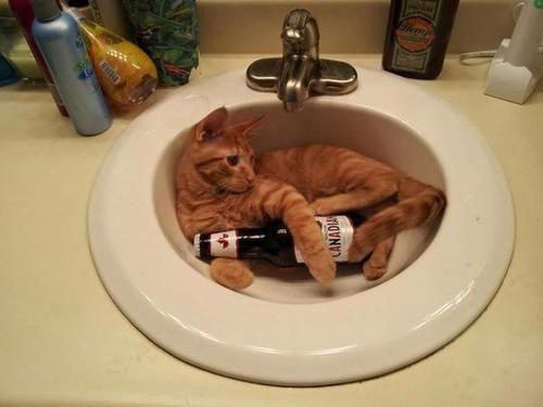 お酒大好き?お酒が好きそうな動物の画像の数々!!の画像(30枚目)