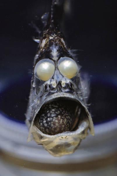 深海の生物の画像(14枚目)