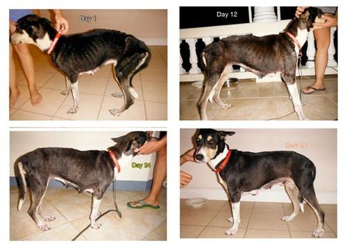 ホッとする!ノラ犬の飼主が見つかるビフォーアフターの比較画像!!の画像(14枚目)