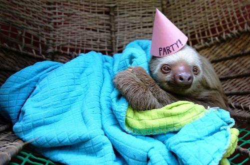動物達の誕生日の写真の数々!!の画像(8枚目)