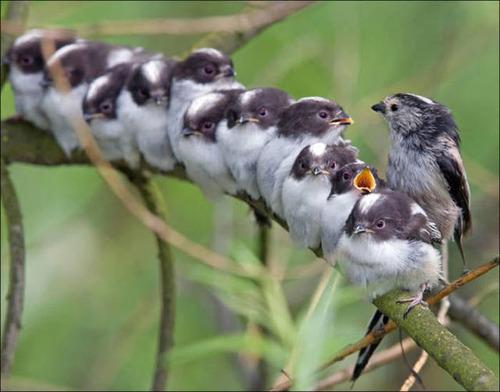超過密!密集状態の鳥の画像がもふもふで癒されるwwの画像(6枚目)