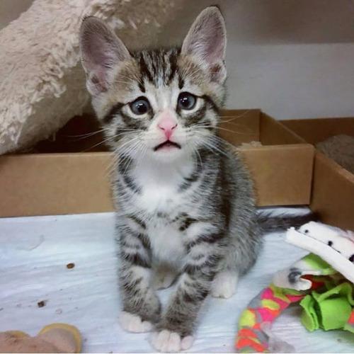 kittens_31