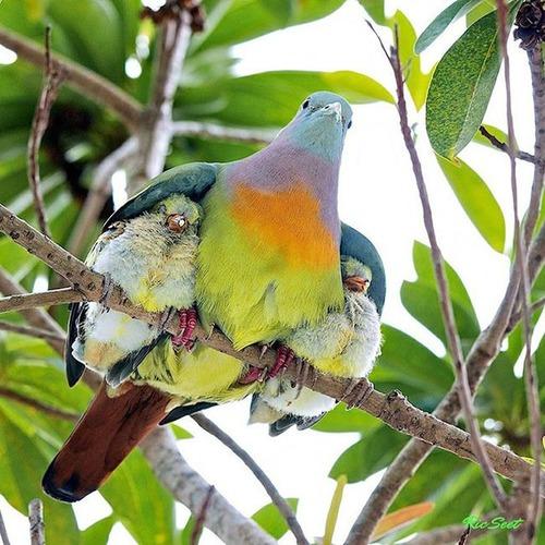 色々な動物の親子の癒される画像の数々!!の画像(21枚目)