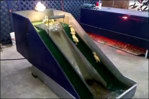 子供のアヒル用の滑り台の画像_000004656