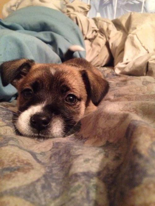 かわい過ぎる子犬の画像の数々!の画像(47枚目)