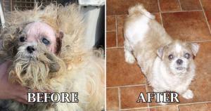 捨て犬の毛をキレイにカットしてるビフォーアフターの画像の数々!!の画像(10枚目)