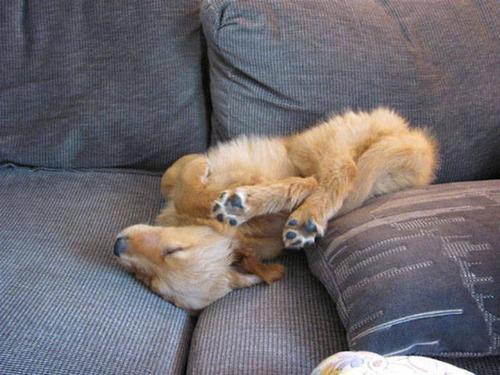 どこでも寝れる!?どこでも寝てる可愛い犬の画像の数々!!の画像(36枚目)