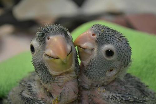 かわい過ぎる!癒される!動物の子供の画像の数々!!の画像(31枚目)