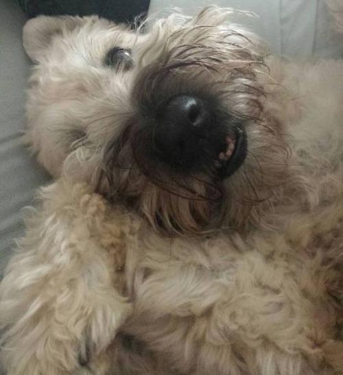 犬も笑うの画像(20枚目)