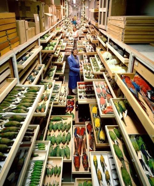 【画像】アメリカを代表するスミソニアン博物館の標本の保存倉庫が凄い!!の画像(2枚目)