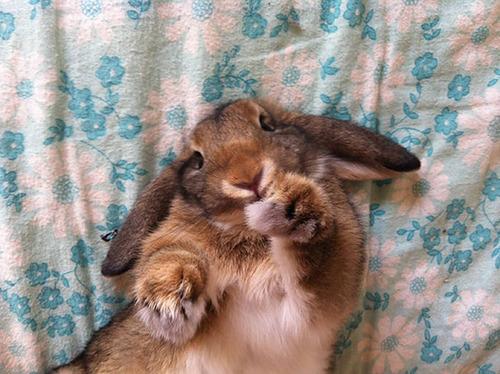 面倒くさい…疲れた…眠い…そんな感じの動物たちの画像!!の画像(6枚目)