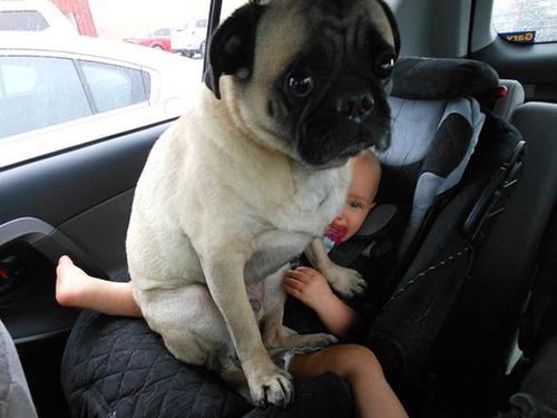犬は可愛いけど、かなりジャマな感じの犬の画像の数々!!の画像(13枚目)