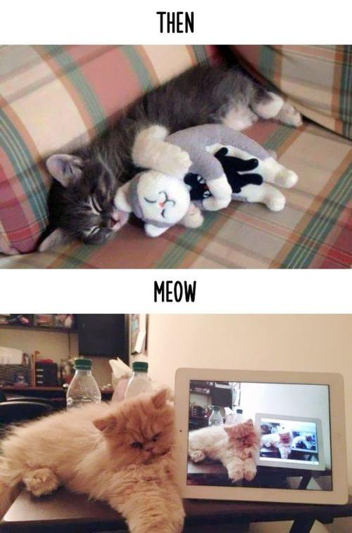 テクノロジーの進化がネコ達に与えた影響の比較画像の数々!!の画像(3枚目)