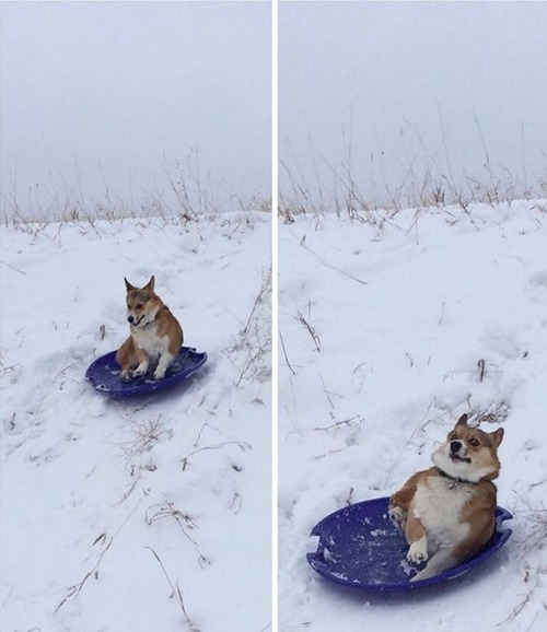 犬はバカ可愛い!!バカだけど憎めない可愛い犬の画像の数々!!の画像(10枚目)