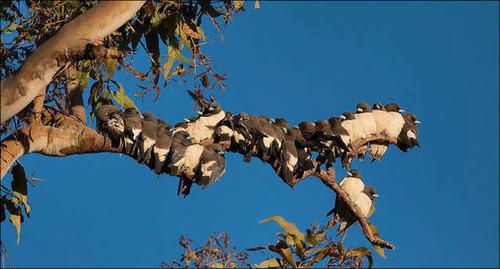 超過密!密集状態の鳥の画像がもふもふで癒されるwwの画像(14枚目)
