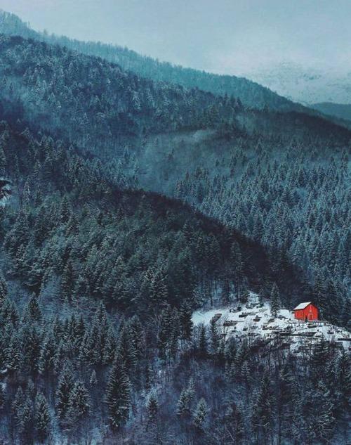 森の中の隠れ家の画像(18枚目)