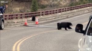 子連れのクマが観光客を追いかける怖すぎる動画…_000060842