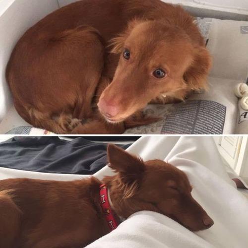 捨て犬が保護された前後の画像(7枚目)