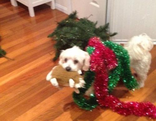 犬とクリスマスの画像(20枚目)