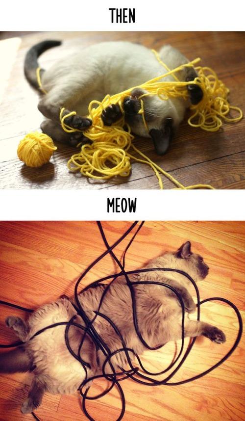 テクノロジーの進化がネコ達に与えた影響の比較画像の数々!!の画像(14枚目)