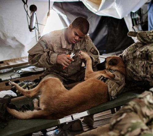 戦地での軍用犬の日常がわかるちょっと癒される画像の数々!!の画像(39枚目)
